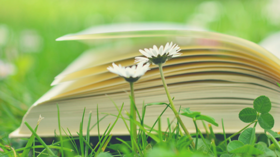 open book on grass with daisies growing in foreground